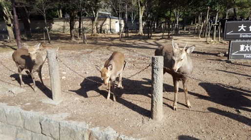 I'm not sure if these deer were in need of minerals, or if they just enjoy the taste of chain